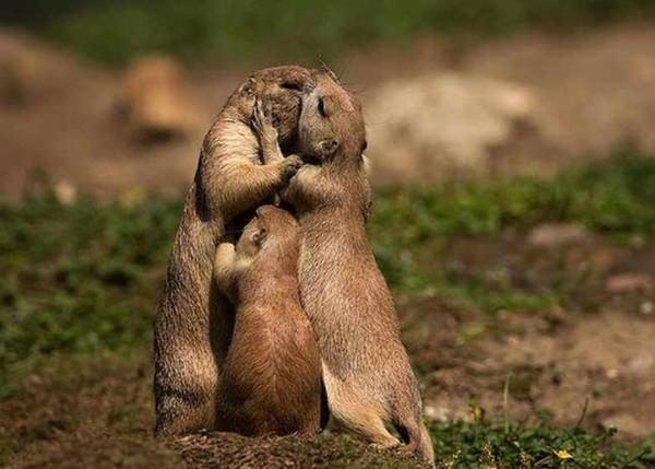 Fotos-de-familias-animales-muy-tiernas-y-bonitas-11